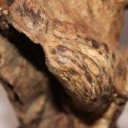 沉香鉴别:怎样看沉香的木质年份与沉香香脂是否相吻合?