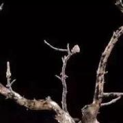 """海柳:似木非木,却被称为""""海底神木"""",据说海柳比黄金玉石还珍贵!"""