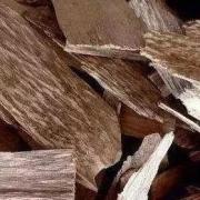 沉香知识:沉香树种有哪些?三大沉香树种,白木香树、蜜香树和鹰木树